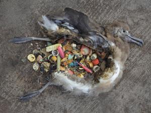 plastik beebikajaka kõhus