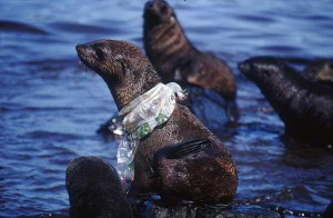 seal-plastic