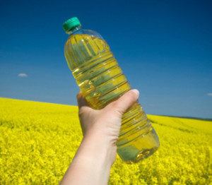 canola-gmo-lawsuit