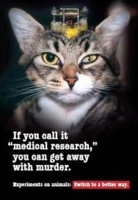 vivisection_cat
