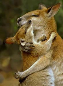 ema-lapse kallistus