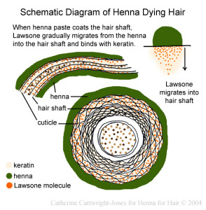 hairdiagram